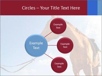 Saddled Horse PowerPoint Template - Slide 79