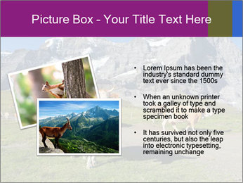 Сows in Alps PowerPoint Templates - Slide 20