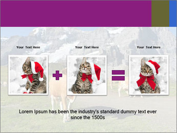 Сows in Alps PowerPoint Templates - Slide 22