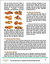 0000088619 Word Templates - Page 4