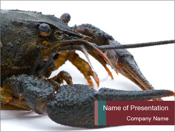 Crayfish PowerPoint Templates - Slide 1