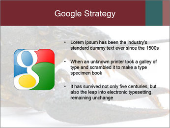 Crayfish PowerPoint Templates - Slide 10