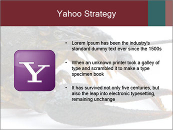 Crayfish PowerPoint Templates - Slide 11