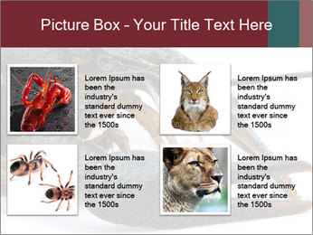 Crayfish PowerPoint Templates - Slide 14