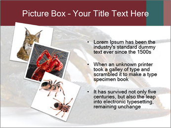 Crayfish PowerPoint Templates - Slide 17