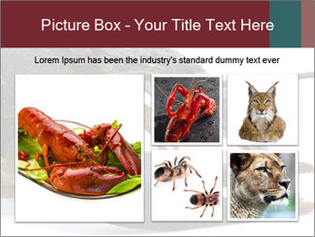 Crayfish PowerPoint Templates - Slide 19