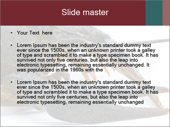 Crayfish PowerPoint Templates - Slide 2