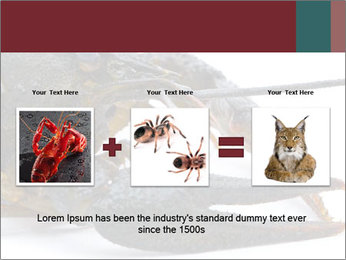 Crayfish PowerPoint Templates - Slide 22
