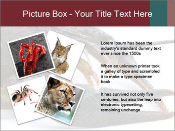 Crayfish PowerPoint Templates - Slide 23