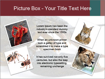 Crayfish PowerPoint Templates - Slide 24
