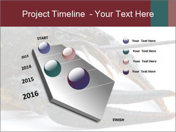 Crayfish PowerPoint Templates - Slide 26