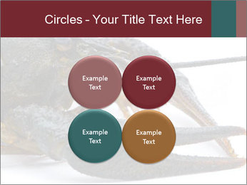 Crayfish PowerPoint Templates - Slide 38