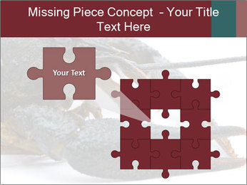 Crayfish PowerPoint Templates - Slide 45
