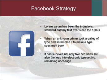 Crayfish PowerPoint Templates - Slide 6
