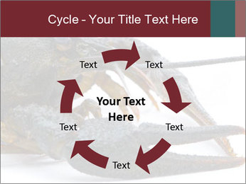 Crayfish PowerPoint Templates - Slide 62