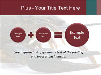 Crayfish PowerPoint Templates - Slide 75