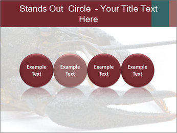 Crayfish PowerPoint Templates - Slide 76
