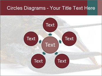 Crayfish PowerPoint Templates - Slide 78