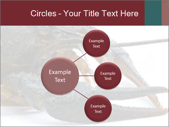 Crayfish PowerPoint Templates - Slide 79