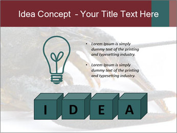 Crayfish PowerPoint Templates - Slide 80