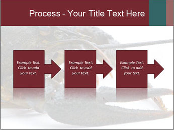 Crayfish PowerPoint Templates - Slide 88