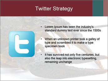 Crayfish PowerPoint Templates - Slide 9