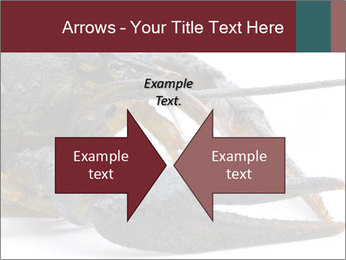 Crayfish PowerPoint Templates - Slide 90