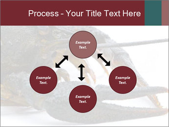 Crayfish PowerPoint Templates - Slide 91