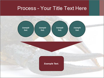 Crayfish PowerPoint Templates - Slide 93