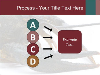 Crayfish PowerPoint Templates - Slide 94