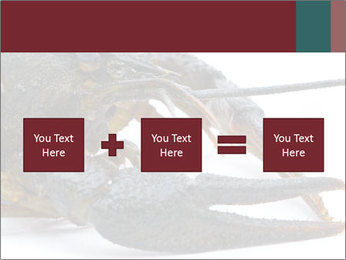 Crayfish PowerPoint Templates - Slide 95