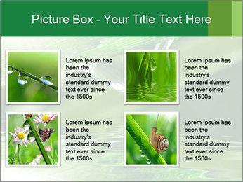 Fresh grass PowerPoint Template - Slide 14