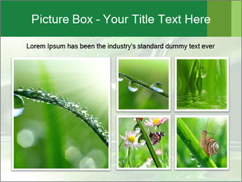 Fresh grass PowerPoint Template - Slide 19