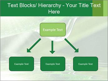 Fresh grass PowerPoint Template - Slide 69