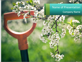 Blooming cherry branch and shovel PowerPoint Templates - Slide 1