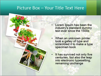 Blooming cherry branch and shovel PowerPoint Templates - Slide 17