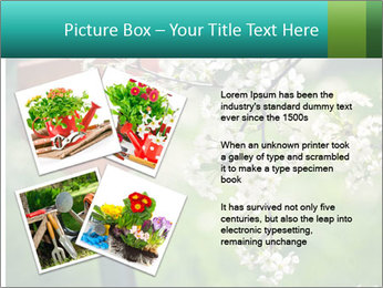 Blooming cherry branch and shovel PowerPoint Templates - Slide 23