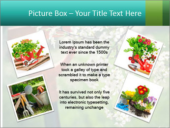 Blooming cherry branch and shovel PowerPoint Templates - Slide 24