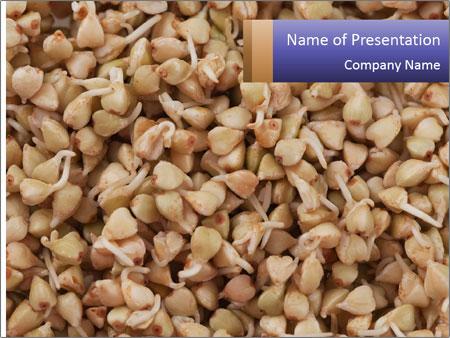 Buckwheat PowerPoint Templates