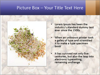 Buckwheat PowerPoint Template - Slide 13