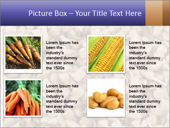 Buckwheat PowerPoint Template - Slide 14