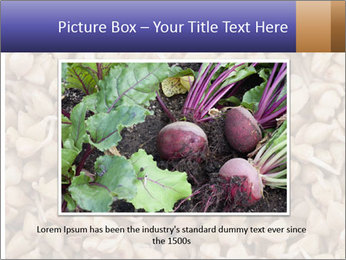 Buckwheat PowerPoint Template - Slide 15