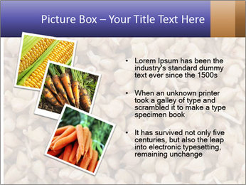 Buckwheat PowerPoint Template - Slide 17