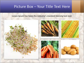 Buckwheat PowerPoint Template - Slide 19