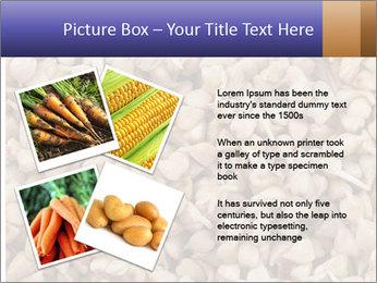 Buckwheat PowerPoint Templates - Slide 23