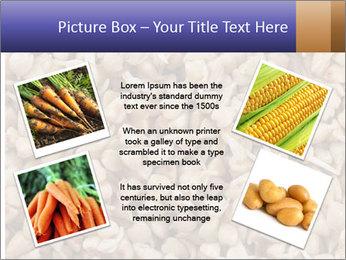 Buckwheat PowerPoint Templates - Slide 24