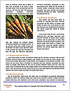 0000088702 Word Templates - Page 4