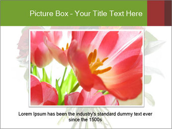 Beautiful gerberas and roses PowerPoint Templates - Slide 15