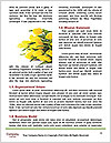 0000088704 Word Templates - Page 4
