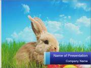 Beige Rabbit PowerPoint Templates